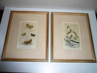 ANTIQUE 2 ORIGINAL 1835 BUTTERFLY HAND COLOURED STEEL ENGRAVINGS BY W.H. LIZARS