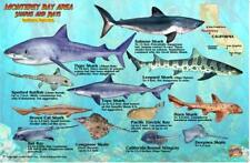 Monterey Sharks by Franko Maps