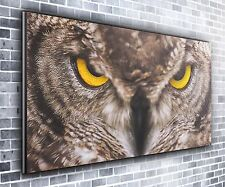 Angry Owl Panoramique Wall Art Toile Impression XXL 4.5 Ft (environ 1.37 m) Large X 2 FT (environ 0.61 m) de haut