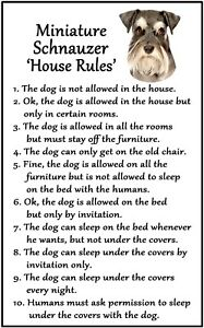Miniature Schnauzer 'House Rules' Flexible Magnet. Sticks to any metal surface