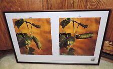 "VINTAGE ZOO DOO CUCUMBER FERTILIZER Framed Print 24-3/4"" X 15-3/4"" ORGANIC Seeds"