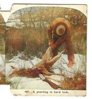 A Yearling in Hard Luck (Hunter in Winter), Circa 1900 Stereoview/SV