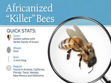 5 Real Africanized bee KILLER Honey Bees  **WET**   SPECIMEN INSECT TAXIDERM