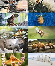 50 XXL Geo Postkarten - 11,0 x 23,0 cm - Neu - Verschiedene Motive