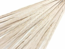 "10 Pieces - 20-22"" Ivory Long Ringneck Pheasant Tail Feathers Halloween Carnival"