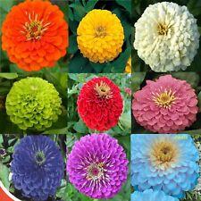 Zinnia elegans seeds Set of colors Flower Seeds from Ukraine