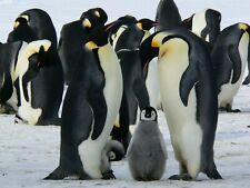 Penguin Bird Nature Landscape Environment Hd Poster