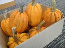 Pumpkin KUMI KUMI-Pumpkin Seeds-MAORI HEIRLOOM- 20 SEEDS.