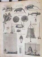 Antique Print -1806 Original  Engraving - Dasypus- Armadillo Halleys Diving Bell