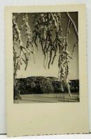 RPPC Unusual Tree Real Photo Postcard H12