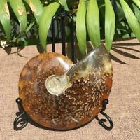 1x natürliche schillernde ammonite madagaskar stein ein facette ammolite T7A8