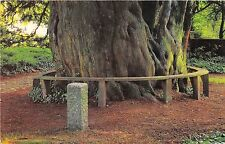 B88009 trumpeter s grave and yew tree selborne   uk 14x9cm