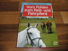 Engelmann+Buurman-Paul -- vom FOHLEN zum REIT- und FAHRPFERD // Aufzucht+Ausbild
