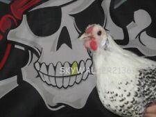 New Listing18 Super Rare Silver Deathlayer Chicken Fertile Hatching Eggs No Reserve