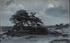 England Postcard AK ~ 1920 Storm beaten Landscape Tree Tree Storm Nature Natural