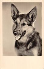 B98511 dog chien real photo germany  animals animaux