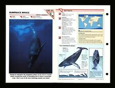 Humpback Whale Wildlife Fact File Mammal Animal Card Home School Study