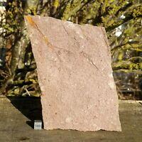 Eocrinoid Fossil - Morocco - Ordovician FSE399 ✔100%genuine✔UKseller