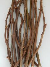 """16 Rose Wood Sticks Tree Branches 1/4~3/8""""D 14~18""""L Thorn Removed"""