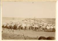 Algérie, Bounoura  Vintage citrate print. Bounoura est une commune de la wilay