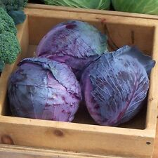 Organic Red Express Cabbage  Seed 50ct Excellent flavor USA Produced