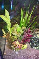 20 Pflanzen Bunter MIX Aquarium Wasserpflanzen gegen Algen (€0,33/Stk)