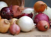 🔥  Zwiebel MIX  10 Sorten 100 Samen  rot  gelb  lila  weiss  tolles Aroma
