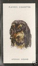 1940 Peter Biegel Dog Art Player & Son Uk Cigarette Card Afghan Hound Head Study