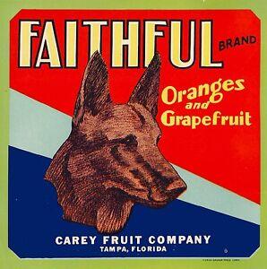 Tampa Florida Faithful German Shepherd Dog Orange Citrus Fruit Crate Label Print