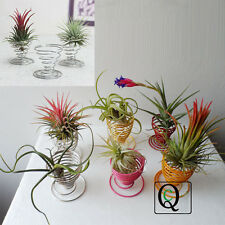 Air Plant Egg Cup Tillandsia Holder Container Flower Planter