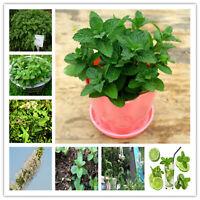 Vegetable Mint Bonsai Seeds Plants Peppermint Spearmint Field Rare 100pcs