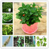 Vegetable Mint Bonsai Seeds Plants Peppermint Spearmint Field Rare 100pcs