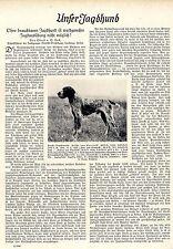 Ohne brauchbaren Jagdhund ist waidgerechte Jagdausübung nicht möglich! 1937