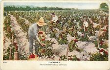 c1910 Postcard; Tomatoes, Truck Farming Pays in Texas, Agriculture, Unposted