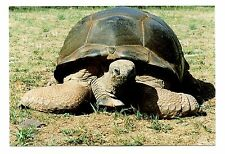 Giant Tortoise Postcard Catskill Game Farm New York From Aldabra Islands New