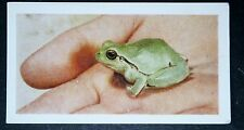 TREE FROG   Pet     Vintage Colour Photo Card  # VGC