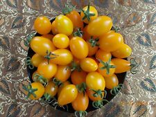 Tomato – 'Bennetts' Yellow Oval (solanum lycopersicum) 25 Reliable Viable Seeds