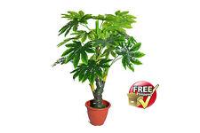 Artificial Aspidistra & Chinese Evergreen Silk Floor Plant 140cm