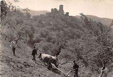 BR5918 Les Ruines du chateau de Vailon vaches cow   france