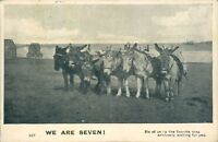 We are seven magnificent seven of seaside donkies 1905