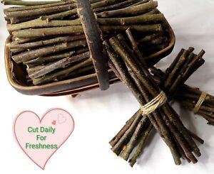 British Fresh Cut Apple Wood Chew Sticks Unsprayed Organic 500g Economy Size!!