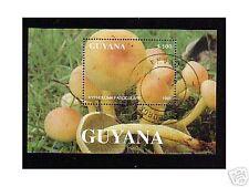 0655++GUYANA  BLOC CHAMPIGNON  N°2