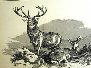 Edwin Landseer STAG AND HIND DEER on MOUNTAIN TOP 1870 Antique Art Print Matted