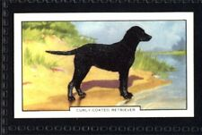 Gallaher Dogs 2nd Series 1938 - Curly-coated Retreiver No. 47