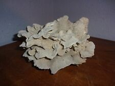 Natural Coral Lettuce Rock for aquarium or display
