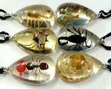 12 Pendant Mixed Insect Taxidermy Resin Fashion Scorpion Ant Jewelry