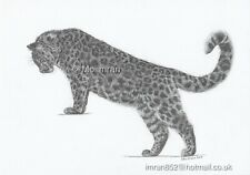 Drawing of Leopard Big Cat - Wildlife Animal Pencil Sketch Artwork by Moiimran