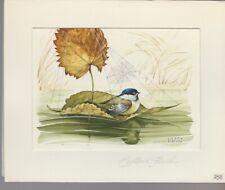 "Captain Finch Beautiful Bird on Leaf w/ Spider Web 7x6"" Greeting Card Art #258"