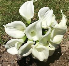 Wedding Bouquet Flowers Cream White Large Latex Calla Lily Real Touch 14 Head