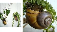 Shell planter for orchid, fern, cactus & small plant 34 c